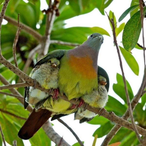 Mother and Baby Birds